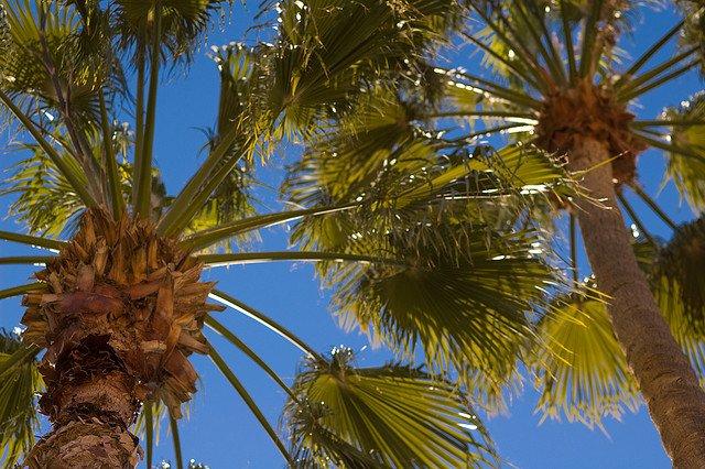 palm-tax